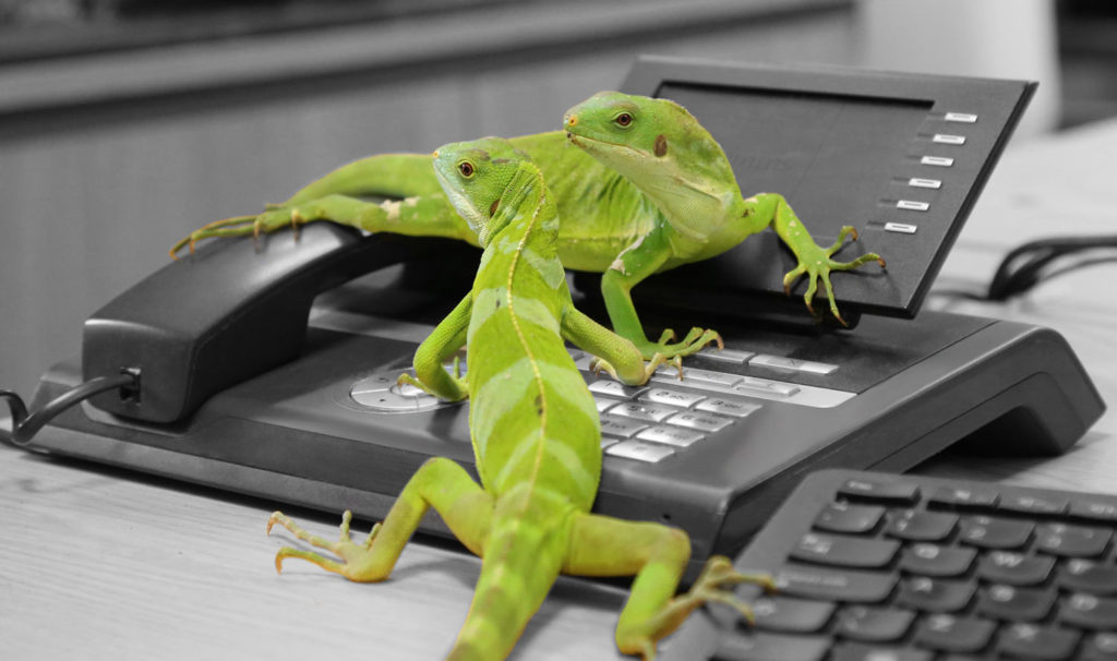Lizards on phone