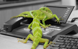 Lizards on phone